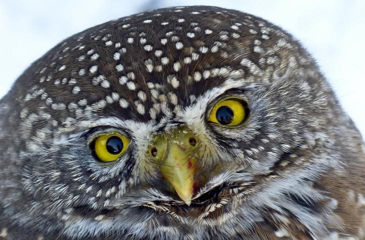 Kemampuan Mata Burung